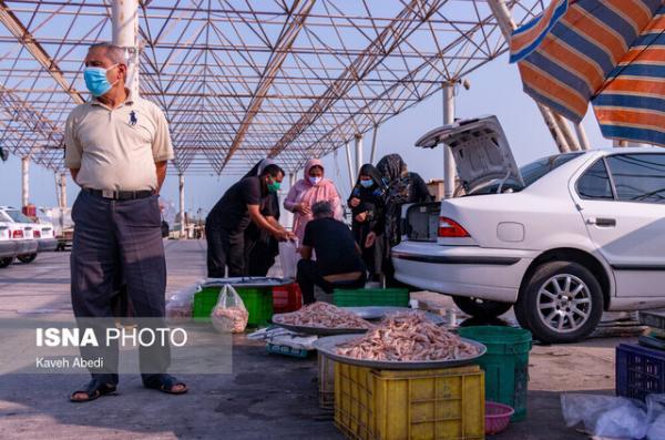 بازار داغ میگو 4 روز مانده به خاتمه فصل صید